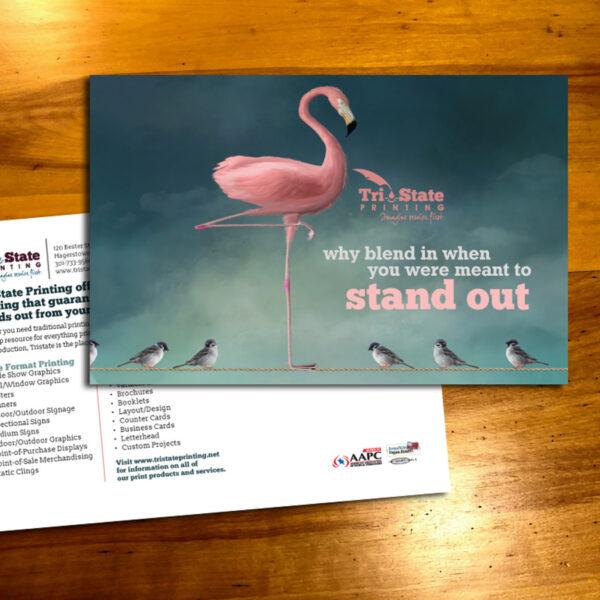 Tri-State flamingo